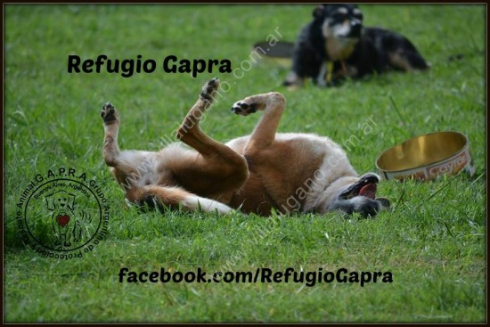 Refugio Gapra